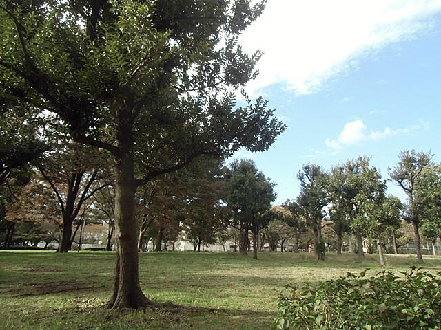 木々の茂る公園