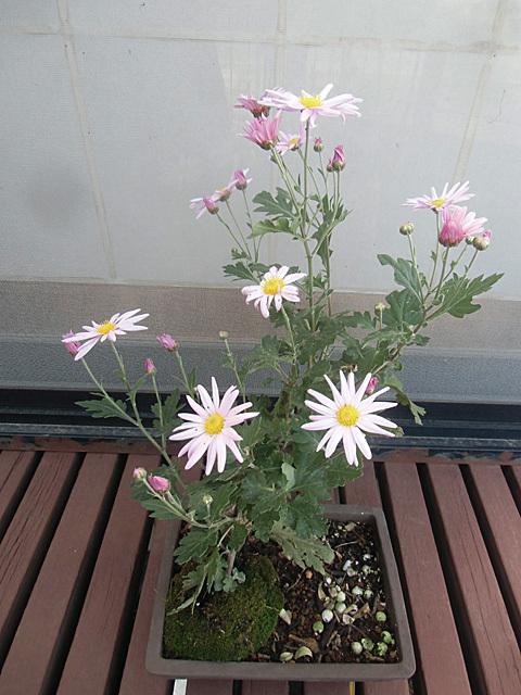 先週の咲き始め
