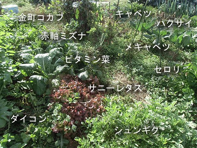 潜んでいる野菜たち