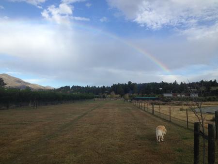 羊の国のラブラドール絵日記シニア!!「虹のかなたに」1