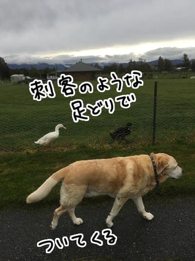 07112016_dog2.jpg