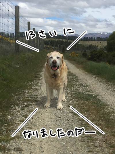 09112016_dog1.jpg