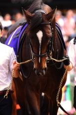 【競馬】 キタサンブラックが2年連続年度代表馬! 満票阻んだ3票はあの馬に