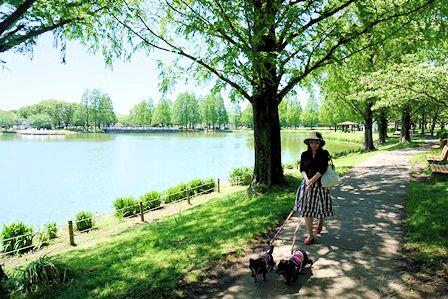 水上公園 (4)