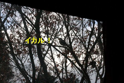 IMG_3175__.jpg