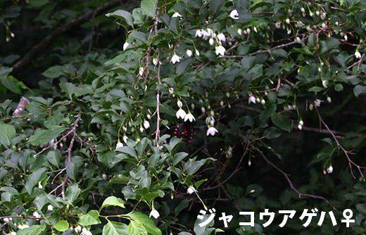 IMG_7691.jpg