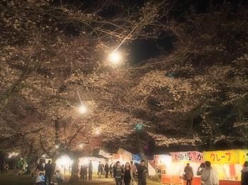 夜桜20160403-3
