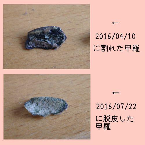 20160722-02.jpg