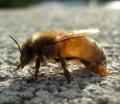 薫る養蜂園