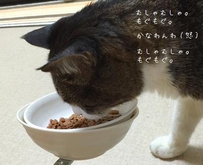 ぷんすか銀③