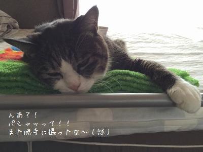 寝ぼけ銀②