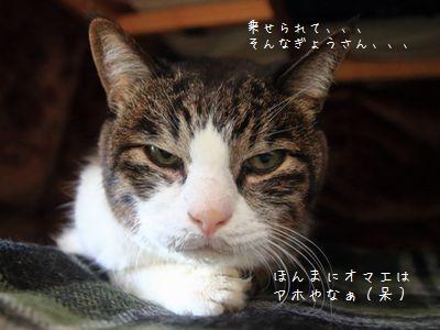 呆れ顔銀③