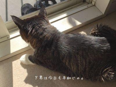 居眠り銀①