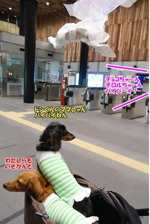 DSC03082_201610171936028d2.jpg