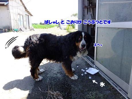 DSCF1342_20160420105539e47.jpg