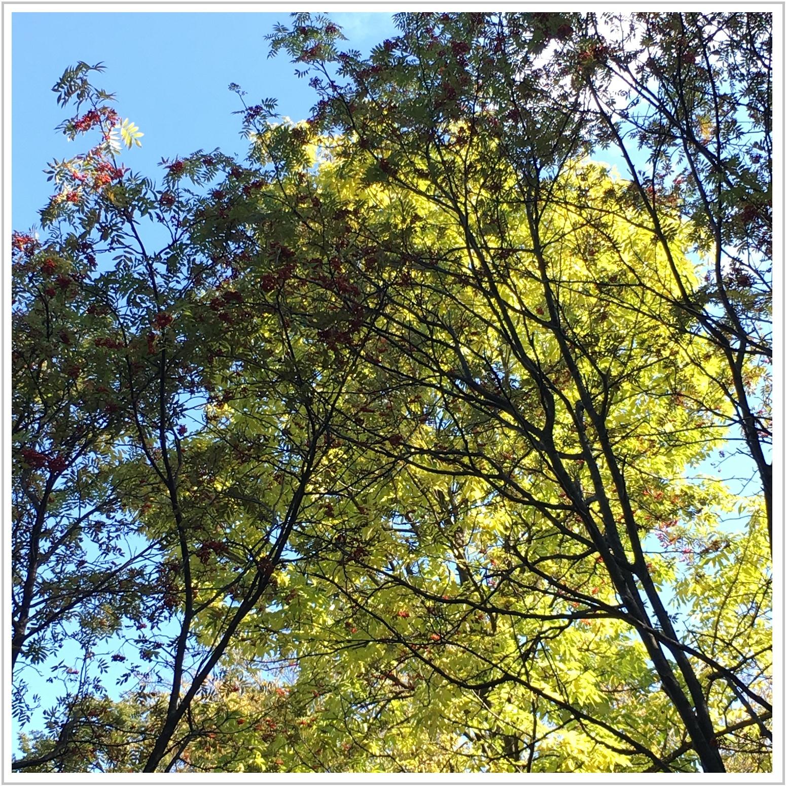 autumn_1_1011.jpg