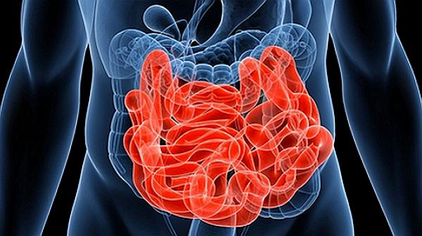 脳1割、腸9割で人生はもっと上手くいく!腸は第2の脳どころではない腸が持つ10の機能が凄すぎる!
