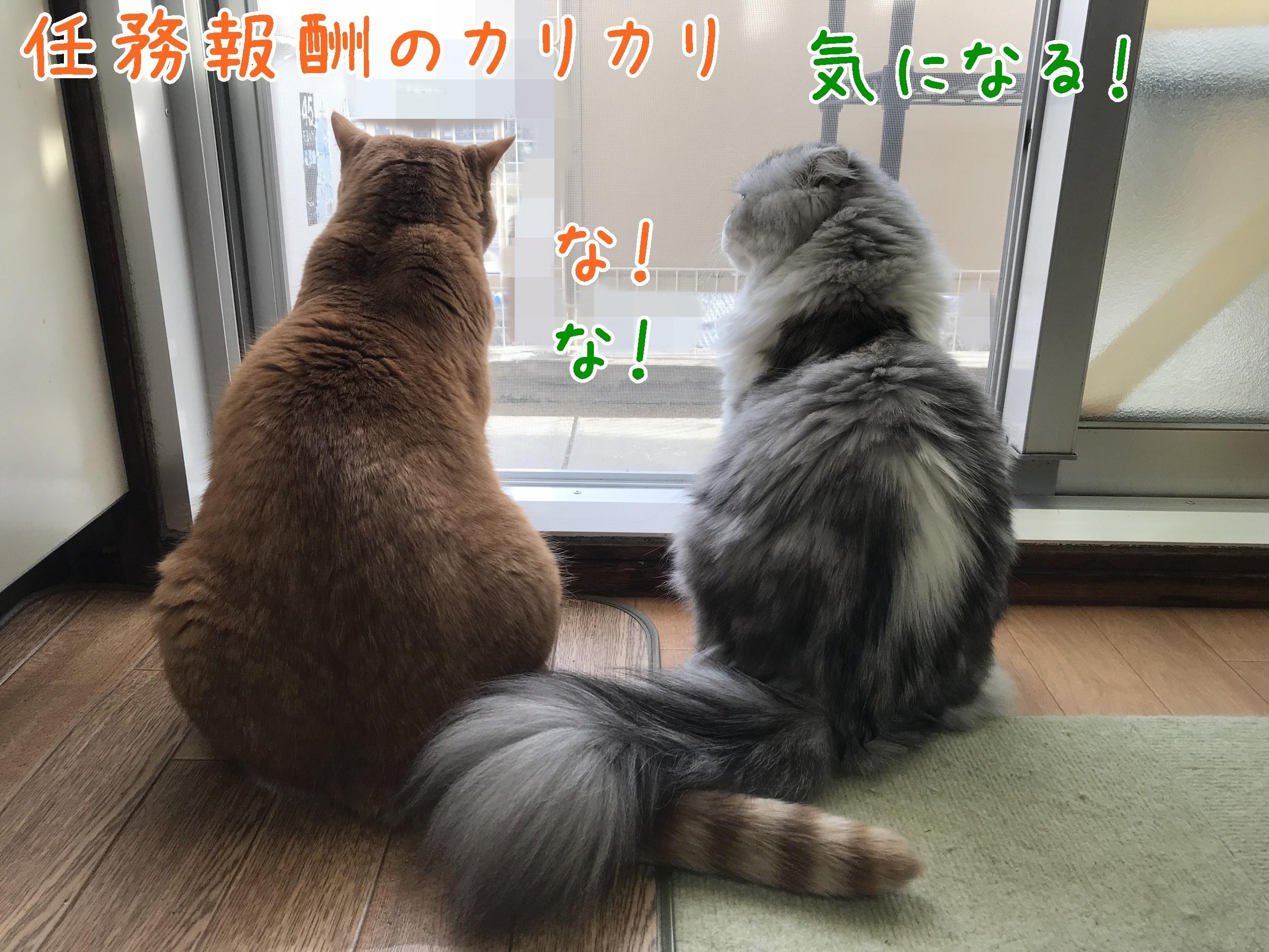 20181202-150659-01.jpg