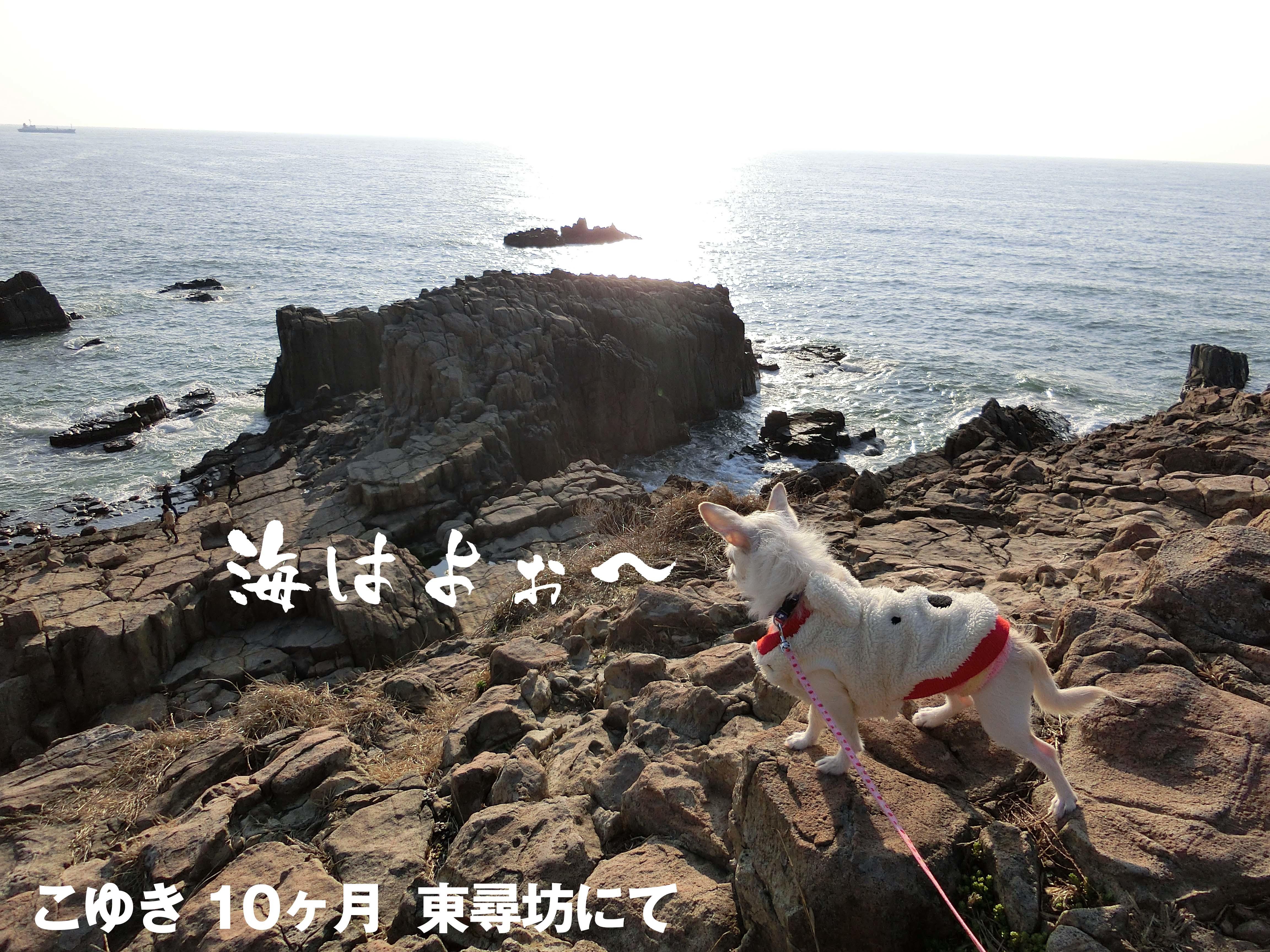 東尋坊CIMG0249_c