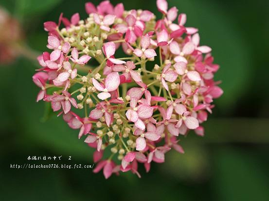 ちっちゃい花