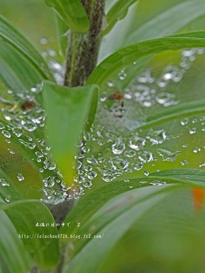 蜘蛛の糸2