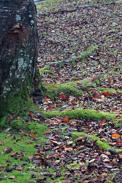 落ち葉と苔