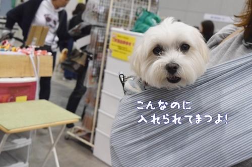 動物フェス北九州4