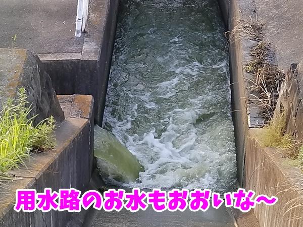 用水路のお水