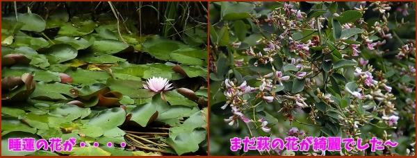 大好きな花たち