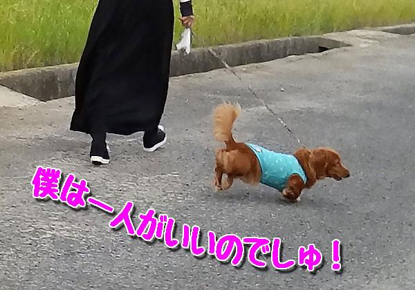 お散歩中のワンちゃん