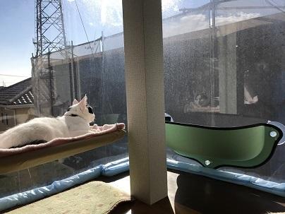 タワーソウルと猫ベッド 008