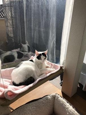 タワーソウルと猫ベッド 006