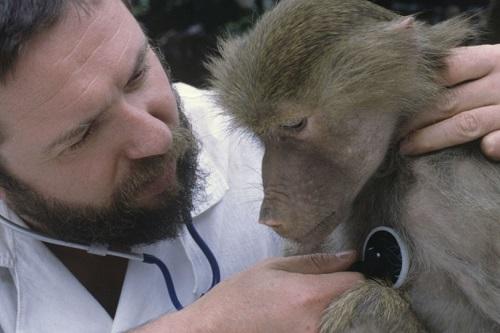 豚の心臓をヒヒに移植する手術が成功、人間への適用の可能性高まる