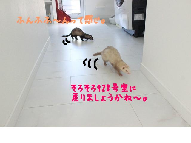 snap_naxtukokedesu_20166113134.jpg