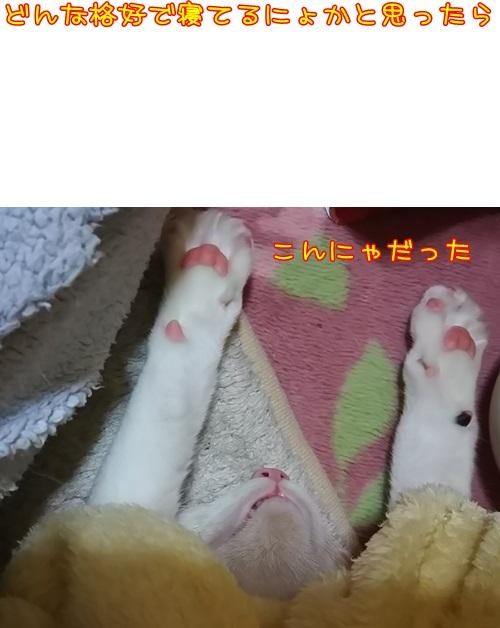 DSC_0473.jpg