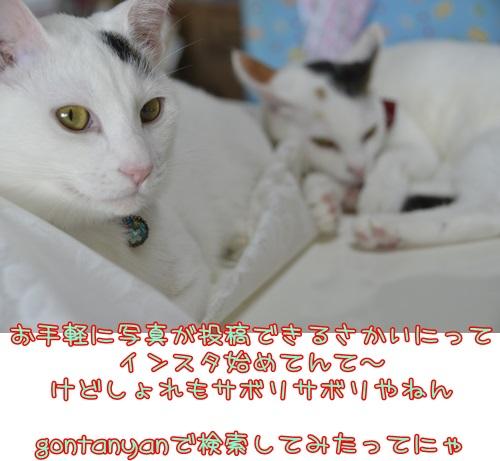 _DSC6219.jpg
