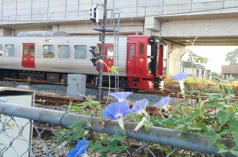 アサガオと電車