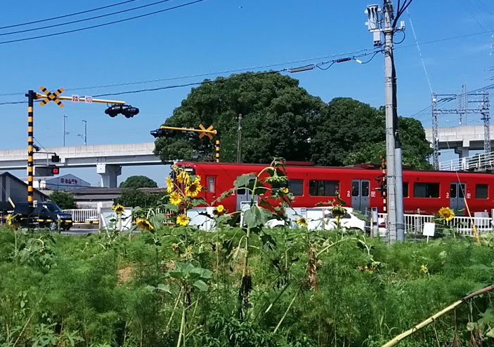 220k-himawari.jpg