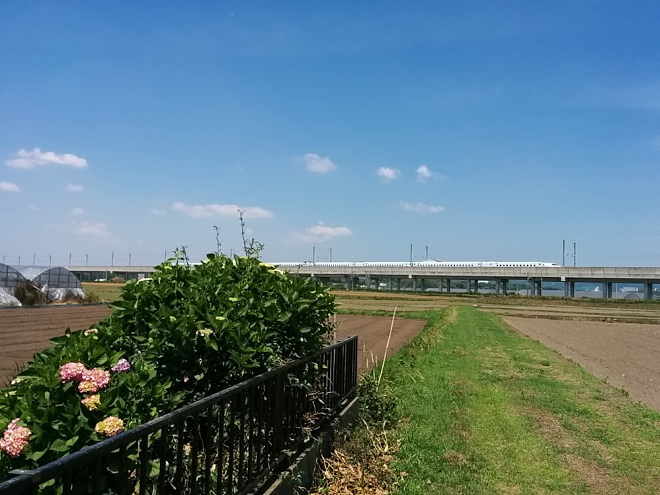 ajisai-shinkansen1.jpg