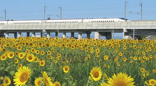 himawari-shinkansen.jpg