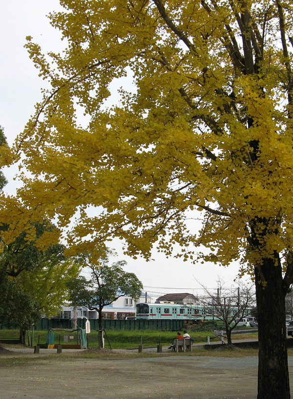 ichou-train2.jpg