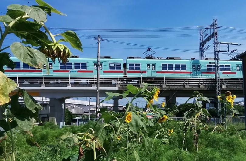 nishitetsu-himawari.jpg