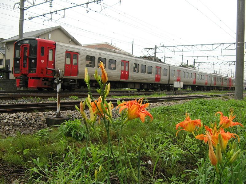 ヤブカンゾウの花と鹿児島本線