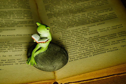 ツバキアキラが撮ったカエルのコポー。静かな夜に読書をして、本の世界に没頭するコポタロウ。