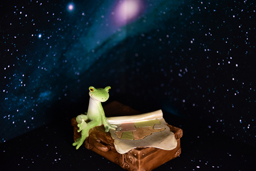 ツバキアキラが撮ったカエルのコポー。広大な宇宙を旅しているコポタロウ。