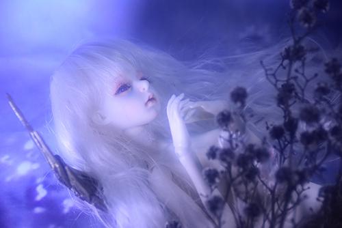 機械の翼を持つ少女、DOLLZONE・GillのAnne(アンヌ)。ドライフラワーと華奢な白い肢体が描く幻想的な夜。