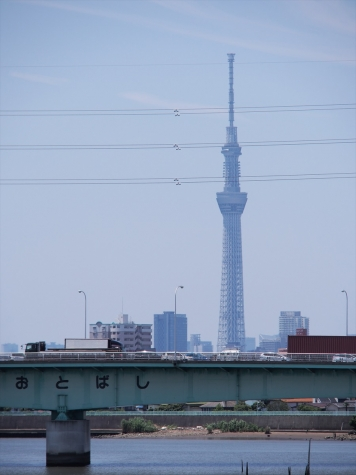 青砥橋と東京スカイツリー