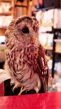 gufo_owl