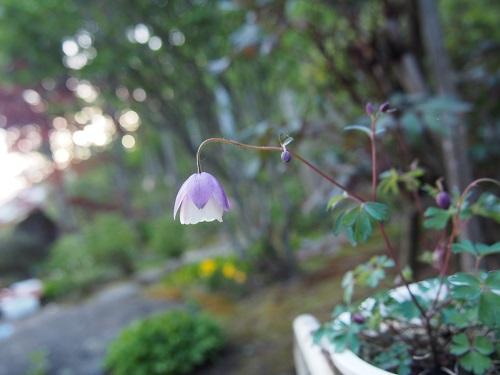 fuurinnodamaki11654.jpg