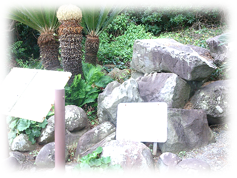 161019hatsushima10.png
